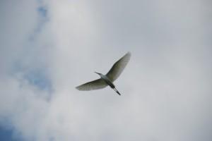 pasare-in-zbor-22121x500