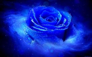 trandafiri_albastru_roua